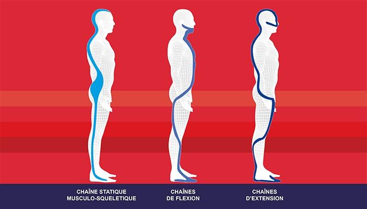 Chaine statique musculo-squeletique - chaines de flexion - chaines d'extension